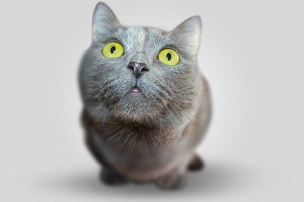 Finas #2: Kot z bryły, czyli sztuczna inteligencja nadchodzi!